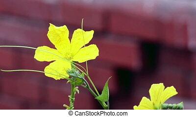 Flower swinging in the wind