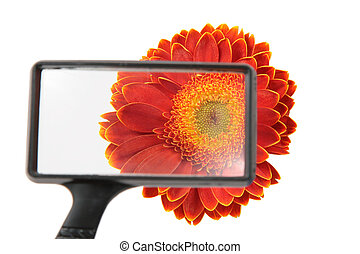 flower through magnifier