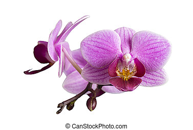 Flower to orchids insulated on white background