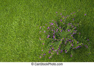 Flower tree on grass field