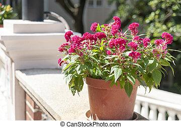 Flower under sun