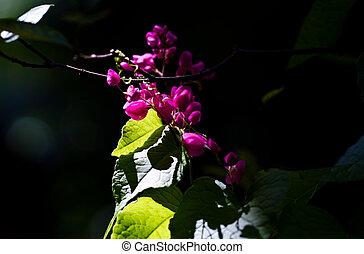Flower Under Sun ray