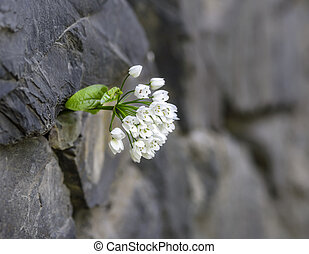 flower up through the wall
