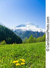 Flower valley near Mont Blanc, Alps