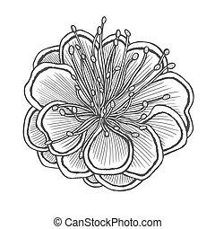 flower vector illustration - F illustration, line pattern....