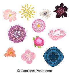 Flower vector set. Floral buds kit.