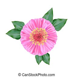 flower. view from above. colored illustration on a white