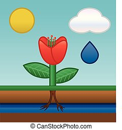 flower water absorbing - flower drawing groundwater by...