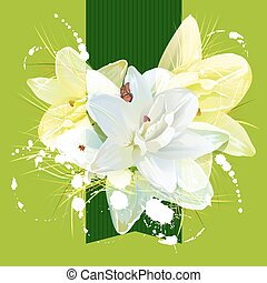 Flower white lily for greeting card