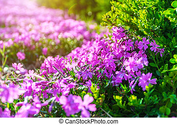 Flower with sunlight in spring. Nature background in spring.