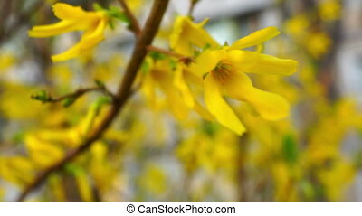 Flower yellow spring