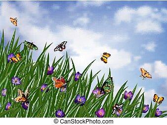 flowerbed, krokus, motyle
