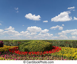 flowerbed of flowers on a background of blue sky with clouds