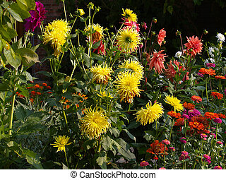Flowerbed. - Flowerbed lit by the sun, very colorful.