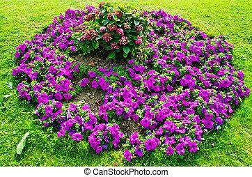 flowerbed - blooming purple flowerbed on the meadow