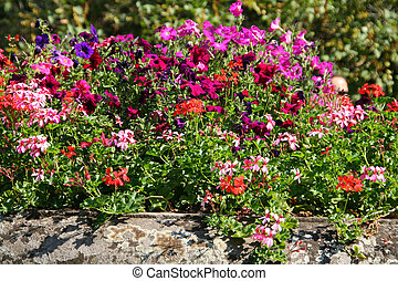 Flowerbed - Big flowerbed with color flowers