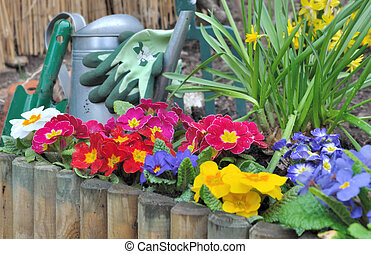 flowerbed - wooden border with colorful pansies and...