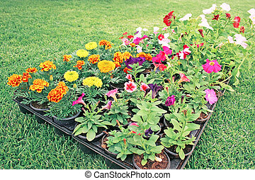 Flowerbed on green lawn.