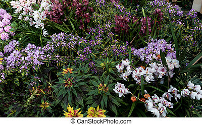 Flowerbed with a variety of flowers