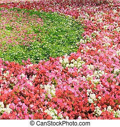 flowerbed with bright flowers