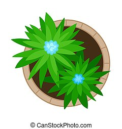 Flowerbed with two plants. View from above. Vector illustration on a white background.