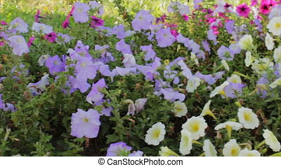 flowerbed with wonderful flowers - flowerbed with various...