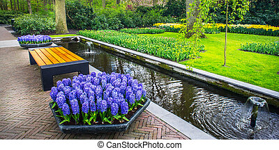 Flowerbeds and bench in the colorful spring garden, Keukenhof. Netherlands.