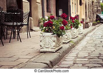 Flowerbeds in Lviv