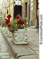 Flowerbeds with red flowers