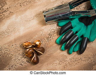 Flowerbulbs and gardening tools over abstract textured background surface