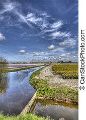 Flowerfield in Holland