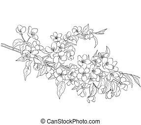 flowering 木, アップル, ブランチ
