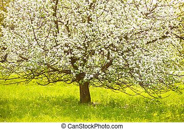 flowering 木