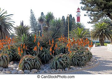 Flowering aloes and the lighthouse in Swakopmund, Namibia