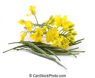 flowering barbarea vulgaris - Rape - Flowering Barbarea...