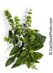 Flowering Basil - Bunch of flowering basil, isolated on...