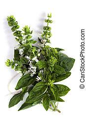 Flowering Basil - Bunch of flowering basil, isolated on...