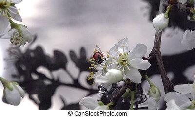 Flowering Branch Above Wate