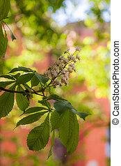branch of a chestnut