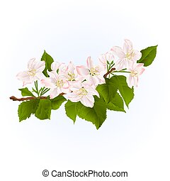 Flowering branch of apple tree spring background vintage vector