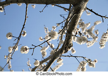 flowering branch of tree is in spring on a background blue sky