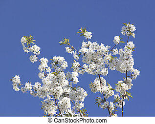 Flowering branch on a blue sky background.