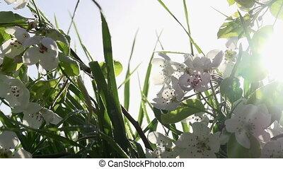 Flowering Branch on Grass
