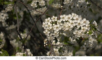 Flowering branches on a background of flowers and plans -...
