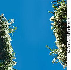 flowering bushes on blue sky background