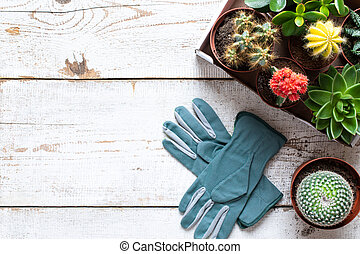 Flowering cactus and succulents background. Collection of various house plants and gardening gloves on white wooden background with copy space.