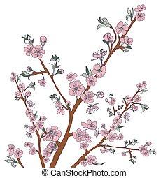 Flowering cherry branch on white. Vintage background