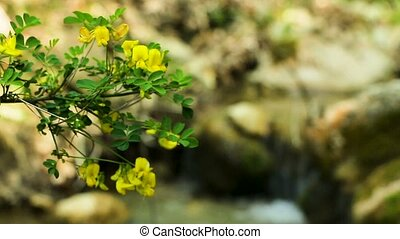 Flowering creek - A yellow branch of flowers on a blurred...