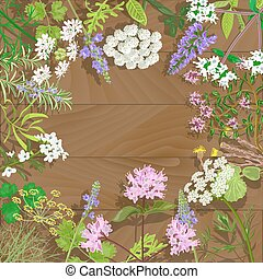 Circle of flowering herbs on wooden background. Salvia, angelica, oregano, rosemary, savory, verbena, anise, fennel, coltsfoot, marjoram flowers. Vector illustration.