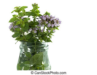 flowering herbs oregano